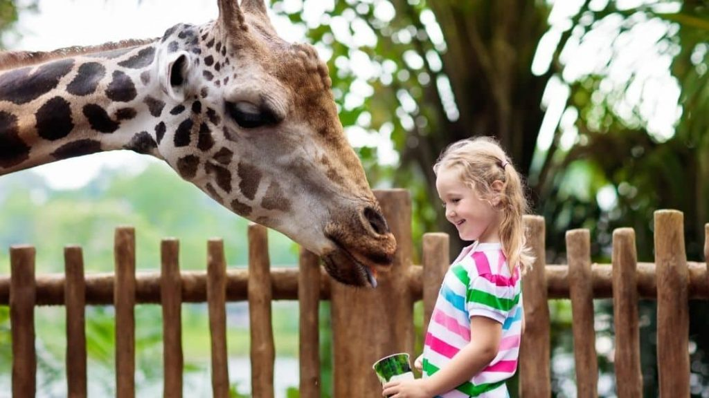 child petting a giraffe at the zoo during spring break staycation